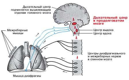Стимул дыхательного центра
