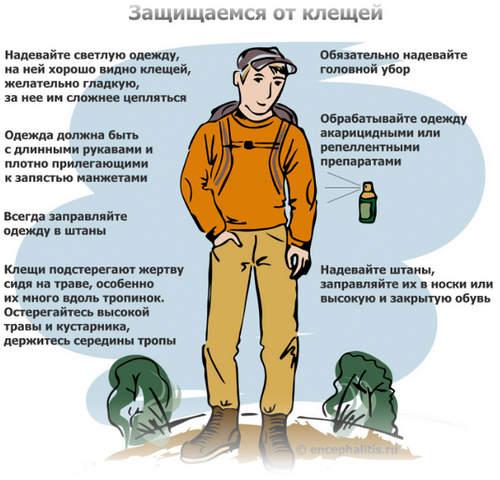 защита от клещей в лесу