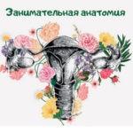 Занимательная анатомия матки и придатков